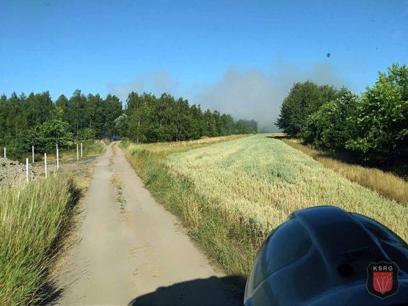 Trzynaście pożarów nieużytków w kilka gorących dni – ZDJĘCIA!