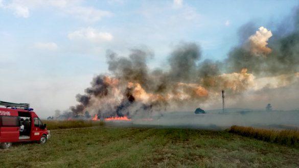 Pożar zboża na pniu w Osieku – ZDJĘCIA!