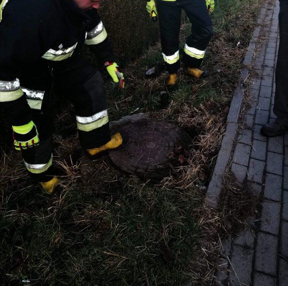Strażacy na pomoc dzikim zwierzętom