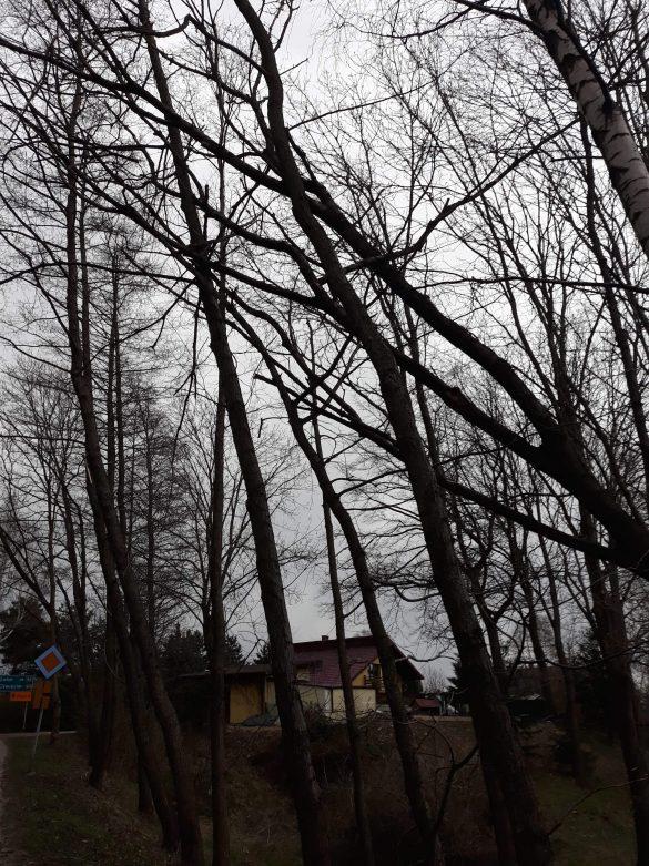 Połamane drzewa, uszkodzone dachy. Strażacy usuwali skutki silnego wiatru – ZDJĘCIA!
